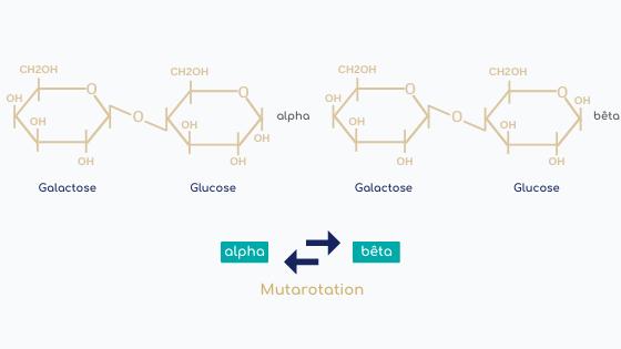 mutarotation lactose